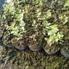 春高蓝莓苗签订合同保证品种