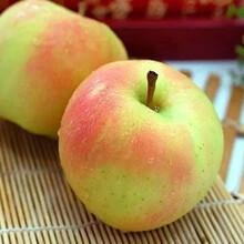 新品种:信浓红苹果苗放心省心、鹤壁龙红蜜苹果苗的作用图片