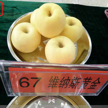 新品种:m9t337苹果树苗供应商、合肥信浓红苹果树质量好的图片