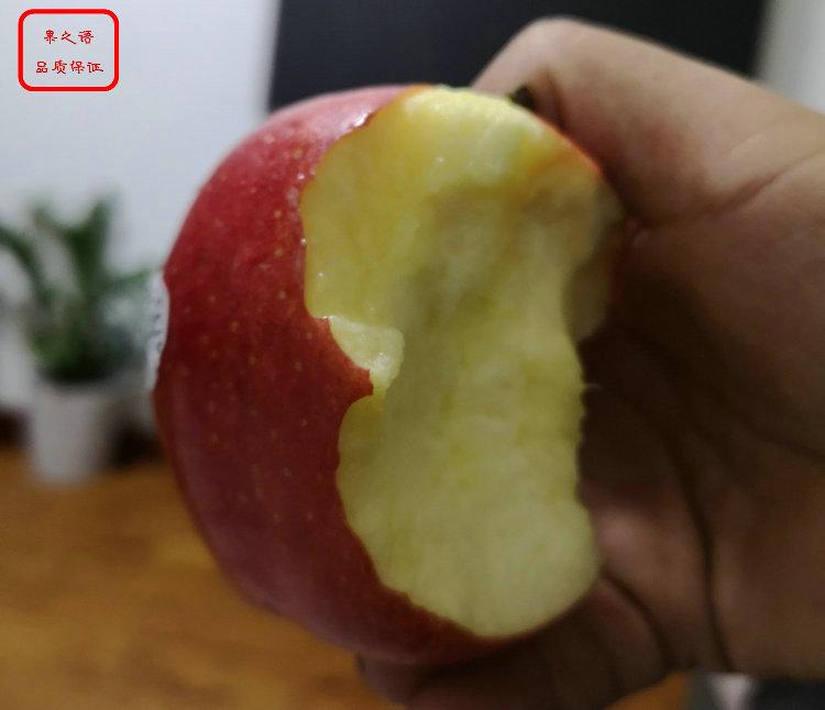新品种:3cm苹果树如何挑选、黄南静香苹果苗哪里便宜