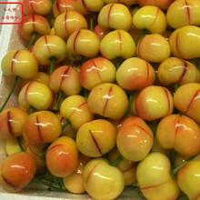 红蜜樱桃苗红蜜樱桃苗品种图片