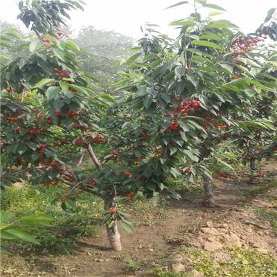 园手工制作樱桃