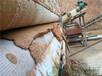 污泥帶式壓濾設備