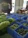 蔬菜配送、食堂承包餐饮管理