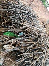 東莞生鐵廢鋼鐵錫、整廠設備廢舊機械、電纜塑料塑膠回收圖片