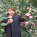 梨树苗多少钱一颗,梨树苗多少品种