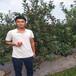 梨树那个品种好,最好的梨树品种