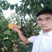 映霜红桃树苗,山东桃树苗新品种,哪里卖黄桃树苗
