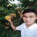 风味皇后桃树苗,桃苗优质新品种