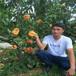 油盘5桃树苗,桃树苗怎么种,哪里出售桃苗