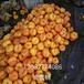 大棚桃树苗新品种,桃树苗新品种价格,哪里出售桃苗