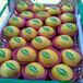 金霞油盘桃树苗,桃树苗新品种,哪里卖黄桃树苗