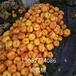 山东桃苗新品种,桃树苗新品种,哪里有桃树苗