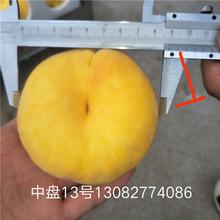黄菊油桃树苗,山东桃树苗新品种,哪里卖黄桃树苗图片