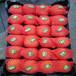 油盘桃树苗,桃树新品种,哪里卖桃树苗