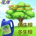 雅安樹木生根劑大樹移栽生根液強力生根劑果樹古樹促生根
