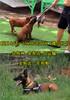 南皮县马犬养殖基地