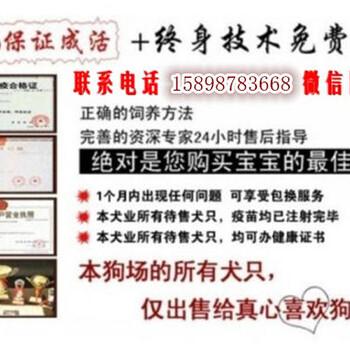 南部县马犬养殖场(满意付款)