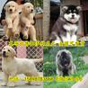南部县马犬养殖场