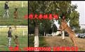 青海黄南同仁县哪里有养狗场口碑厂家