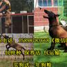 马犬养殖场