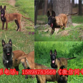 广东云浮罗定狗场可信赖的