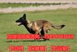 新疆克孜勒苏乌恰县哪里有纯种杜高犬出售多少钱一只