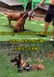 青海海西乌兰县哪里有养狗场有口碑图片
