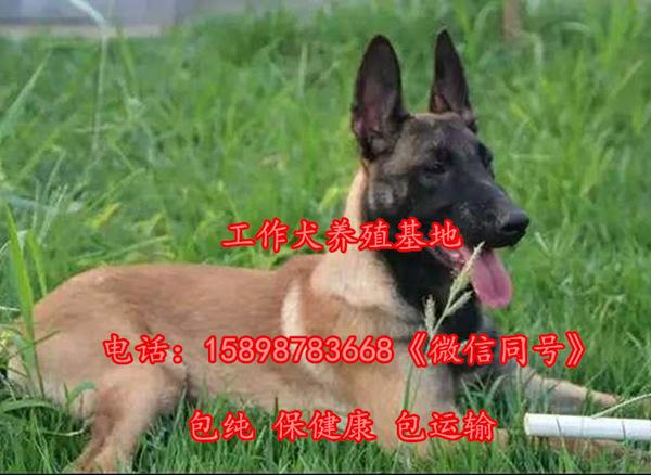 湘乡肉狗万端育场