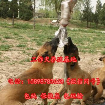 赣州石城县专业繁殖卡斯罗