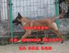 贵州黔南惠水县狗场联系电话出售30多种名犬