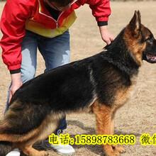 温宿县养狗场图片