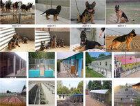 青海海南黑狼犬价格大型养狗场图片2