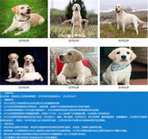 青海海南黑狼犬价格大型养狗场图片3
