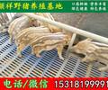 上海杂交野猪批发价格
