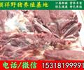 锡林郭勒散养野猪批发价格