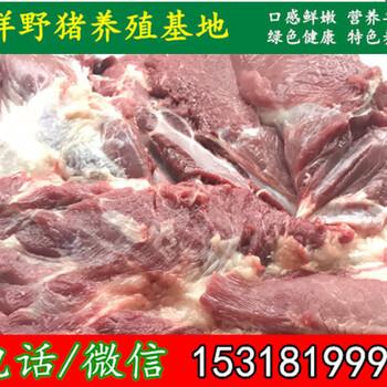 牡丹江有没有纯种野猪市场价格