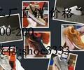 给大家介绍下莆田鞋哪里有卖,一双卖多少钱