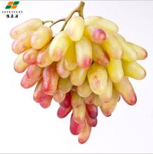 美人指葡萄甜美爽脆現摘現發豫森農業新鮮水果圖片