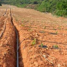 城市园林绿化管_PE农田灌溉管_农业排灌用管批发