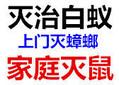广州天河区白蚁防治公司、科学灭杀白蚁、专业装修白蚁预防图片