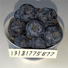 蓝莓苗品种,蓝莓苗泰安,蓝莓苗特性,万恒丰基地图片