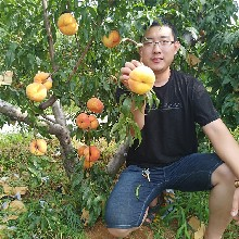 哪里有卖桃树苗的,新品种桃树苗批发价格多少钱,万恒丰桃树苗基地图片