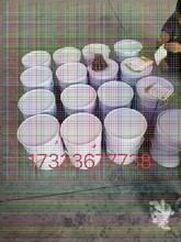 凉山防腐玻璃鳞片涂料产品用途图片