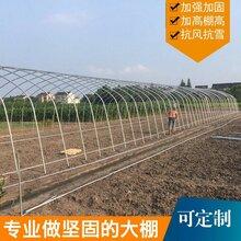 济南哪里蔬菜大棚便宜图片