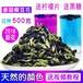 泰國蝶豆花藍蝴蝶調色花茶批發零售報價