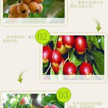 樱桃斑驳、失绿.扭曲、破碎、坏病害果树病毒奥丰厂家批发40克图片