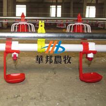 供应自动化养殖设备自动化养鸡水线料线自动化养鸡饮水器图片