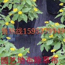 防草布厂家、抑草布价格、白色编织布批发、复合编织布图片