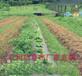 防草布保證樹木根部的透氣性、果園防草布透水性,保濕性等